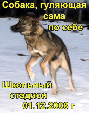 Собака, гуляющая сама по себе
